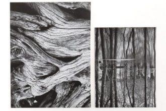 מחברות קנבס Trees בשני גדלים ועיצובים
